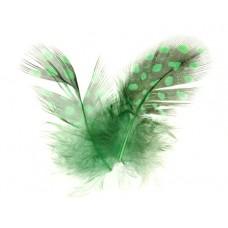 Зелени големи пера