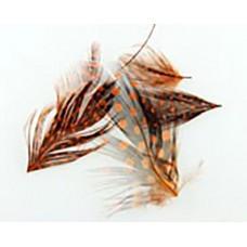 Оранжеви големи пера