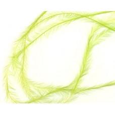 Зелени малки пера