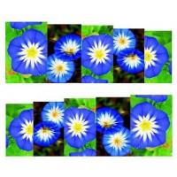 """Ваденки """"Синьо-бели цветя"""""""
